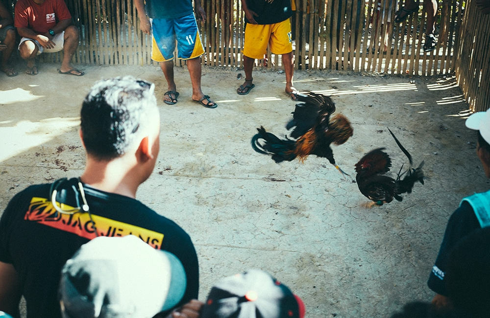 11_cockfight-21